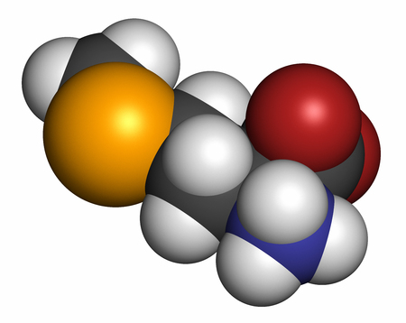 selenium: Selenomethionine amino acid molecule. Selenium containing natural analog of methionine. 3D rendering. Atoms are represented as spheres with conventional color coding: hydrogen (white), carbon (grey), oxygen (red), nitrogen (blue), selenium (orange).