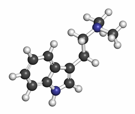 endogenous: Dimethyltryptamine (DMT) psychedelic drug molecule. Present in the drink ayahuasca. 3D rendering. Atoms are represented as spheres with conventional color coding: hydrogen (white), carbon (grey), nitrogen (blue).