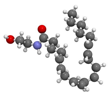 amide: Anandamide endogenous cannabinoid neurotransmitter molecule. 3D rendering. Atoms are represented as spheres with conventional color coding: hydrogen (white), carbon (grey), oxygen (red), nitrogen (blue).
