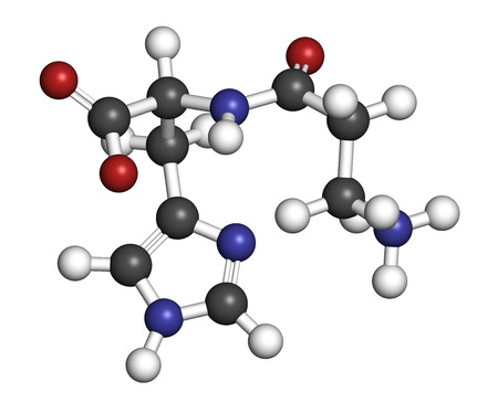 Carnosine (L-carnosine) food supplement molecule. 3D rendering. Atoms are represented as spheres with conventional color coding: hydrogen (white), carbon (grey), oxygen (red), nitrogen (blue).