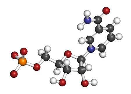 mitochondria: Nicotinamide mononucleotide molecule. Precursor of NAD+. 3D rendering. Atoms are represented as spheres with conventional color coding: hydrogen (white), carbon (grey), oxygen (red), nitrogen (blue), phosphorus (orange).