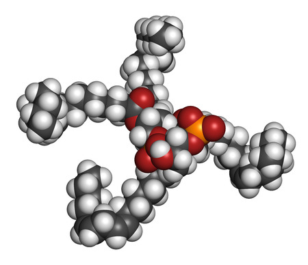 Cardiolipin (tetralinoleoyl cardiolipin) molecule. Important component of the inner membrane of mitochondria. 3D rendering. Atoms are represented as spheres with conventional color coding: hydrogen (white), carbon (grey), oxygen (red), phosphorus (orange)