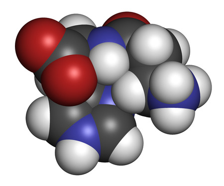 food supplement: Carnosine (L-carnosine) food supplement molecule. 3D rendering. Atoms are represented as spheres with conventional color coding: hydrogen (white), carbon (grey), oxygen (red), nitrogen (blue).