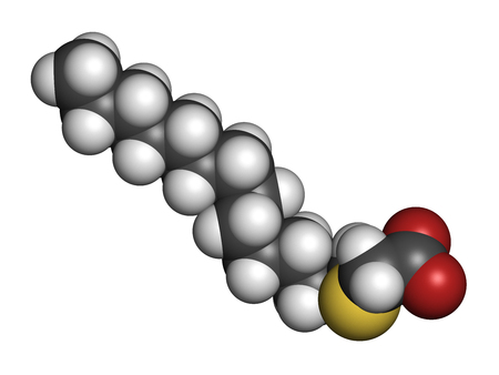 agonist: Tetradecylthioacetic acid (TTA) synthetic fatty acid molecule. 3D rendering. Atoms are represented as spheres with conventional color coding: hydrogen (white), carbon (grey), oxygen (red), sulfur (yellow).