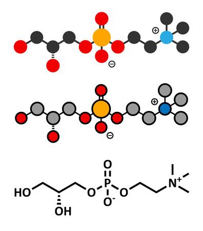enhancer: Alpha-GPC (L-Alpha glycerylphosphorylcholine, choline alfoscerate) molecule. Stylized 2D renderings and conventional skeletal formula.