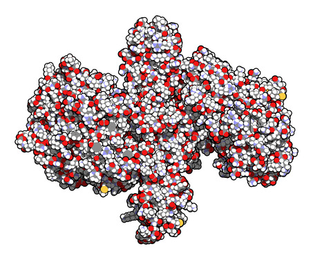 Botulinum toxin neurotoxic protein, 3D rendering. Produced by Clostridium botulinum. Cosmetically used to treat wrinkles. Atoms are represented as spheres with conventional color coding: hydrogen (white), carbon (grey), nitrogen (blue), oxygen (red), sulf Stock Photo