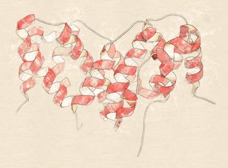 dimer: Interferon gamma (IFNg) cytokine molecule, 3D rendering. Recombinant form used in treatment of osteopetrosis and chronic granulomatous disease. Cartoon representation. Stock Photo