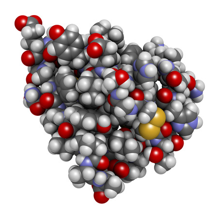hyperglycemia: Insulin peptide hormone, 3D rendering. Important drug in treatment of diabetes. Atoms shown as spheres with conventional color coding.