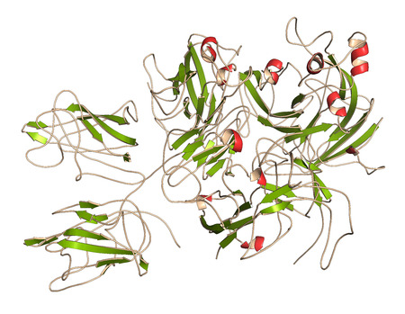 secondary: Coagulation factor VIII (fVIII) protein, 3D rendering. Deficiency causes hemophilia A. Cartoon representation with secondary structure coloring (green sheets, red helices). Stock Photo