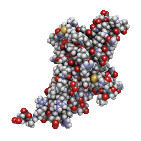 apoptosis: Programmed cell death 1 (PD-1, CD279) receptor protein, 3D rendering. PD-1 is a major cancer drug target. Atoms are represented as spheres with conventional color coding: hydrogen (white), carbon (grey), nitrogen (blue), oxygen (red), sulfur (yellow). Stock Photo