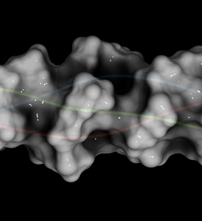proline: Collagen model protein, chemical structure. 3D rendering. Essential component of skin, bone, hair, connective tissue, etc. Cartoon representation combined with semi-transparent surfaces.