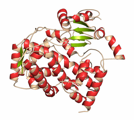 polypeptide: Cytochrome P450 (CYP3A4) liver enzyme in complex with the antibiotic erythromycin. Cartoon representation with secondary structure coloring (green sheets, red helices).