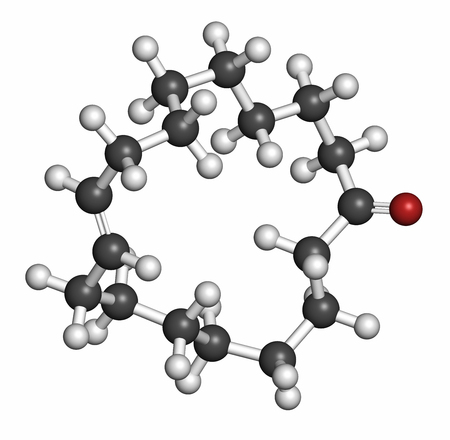civet cat: Civetone civet cat pheromone molecule, 3D rendering. Used in perfume. Atoms are represented as spheres with conventional color coding: hydrogen (white), carbon (grey), oxygen (red).