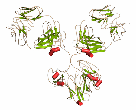 epitope: IgG1 monoclonal antibody (immunoglobulin). 3D rendering. Many biotech drugs are antibodies. Cartoon representation with secondary structure coloring (green sheets, red helices).