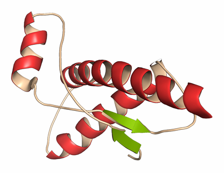Human prion protein (hPrP), chemical structure. 3D rendering. Associated with neurodegenerative diseases, including kuru, BSE and Creutzfeldt-Jakob. Cartoon representation with secondary structure coloring (green sheets, red helices).