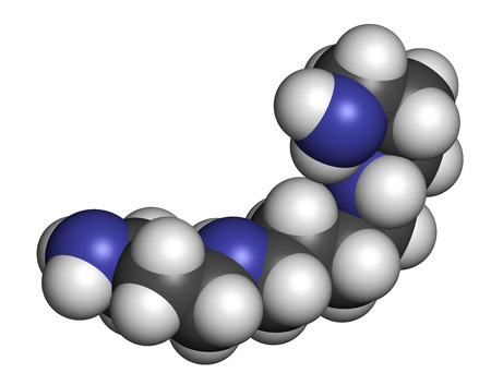 Spermine molecule. 3D rendering. Atoms are represented as spheres with conventional color coding: hydrogen (white), carbon (grey), nitrogen (blue).