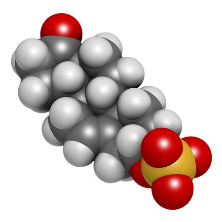 Dehydroepiandrosterone sulfate (DHEA-S) molécula de la hormona natural. Representación 3D Los átomos se representan como esferas con codificación de colores convencionales: hidrógeno (blanco), carbono (gris), oxígeno (rojo), azufre (amarillo).