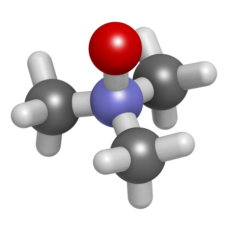Trimethylamine N-oxide (TMAO) molecule. 3D rendering. Atoms are represented as spheres with conventional color coding: hydrogen (white), carbon (grey), nitrogen (blue), oxygen (red).