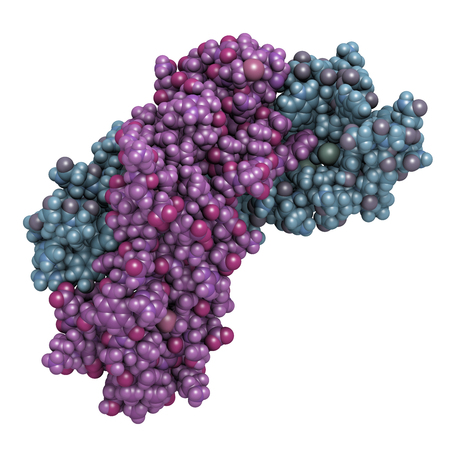 Activin A protein. Stimulates FSH secretion and plays role in regulation of menstrual cycle. 3D rendering based on protein data bank entry 2arv. Atoms shown as color-coded spheres. Per chain coloring. 版權商用圖片