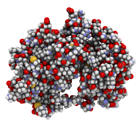 MEK1 or mitogen-activated protein kinase kinase 1 (rabbit) protein. MEK inhibitors are used in treatment of cancer and include cobimetinib and trametinib. 3D rendering based on protein data bank entry 5kkr. Atoms are represented as spheres with convention