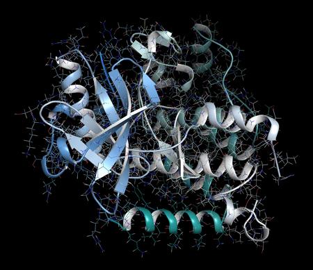 leucemia: Receptor del factor de crecimiento derivado de plaquetas A (PDGFRA, dominio quinasa). Objetivo del anticuerpo monoclonal contra el cáncer olaratumab. Representación 3D basada en la entrada del banco de datos de proteínas 5k5x. Representación combinada de dibujos animados y barras con coloración de degradado de columna vertebral. Foto de archivo