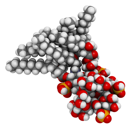 lipid a: Lipopolysaccharide (LPS, lipid A and inner core fragment) endotoxin molecule from E. coli. 3D rendering based on protein data bank entry 3fxi. Atoms are represented as spheres with conventional color coding.