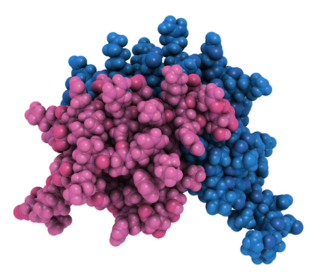 Interleukin 8 (IL-8) cytokine protein. IL8 can be secreted by macrophages and a number of other cell types and is involved in the chemotaxis of neutrophils to infection sites. 3D rendering based on protein data bank entry 1il8. Atoms shown as color-coded