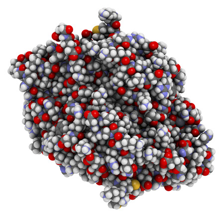 enteritis: Calprotectin protein. Antimicrobial protein that is capable of sequestering the essential nutrients manganese and zinc. Used as biomarker of inflammatory bowel disease. 3D rendering based on protein data bank entry 4xjk. Atoms are represented as spheres w Stock Photo