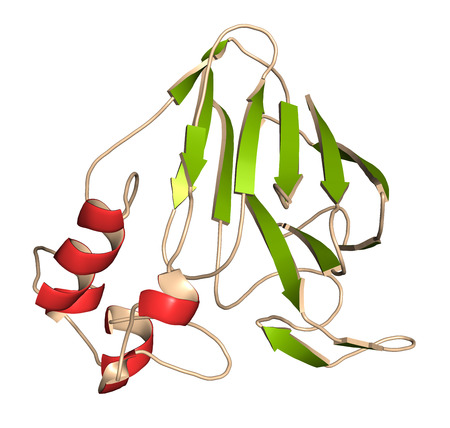 Thaumatin sweetener protein. Isolated from katemfe fruit. 3D rendering based on protein data bank entry 5lh7. Cartoon representation with secondary structure coloring (green sheets, red helices). Stock Photo