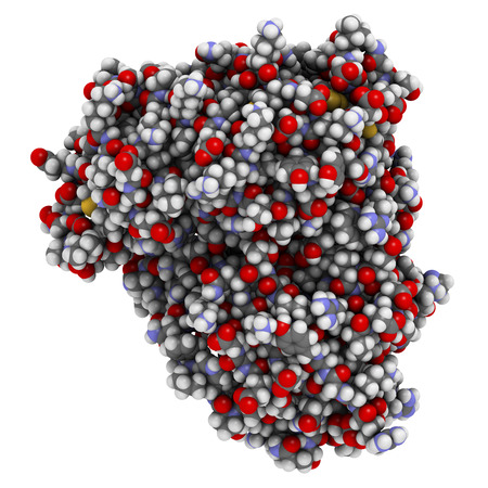 protease: Beta-secretase 1 (BACE1, aspartyl protease domain). BACE inhibitors are investigated as a therapy for Alzheimers disease. 3D rendering based on protein data bank entry 3r2f. Atoms are represented as spheres with conventional color coding.