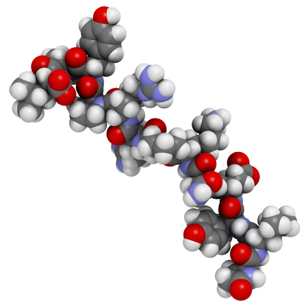 polymer: Neurotensin neurotransmitter peptide (Q1E mutated). 3D rendering based on protein data bank entry 2lne. Atoms are represented as spheres with conventional color coding. Stock Photo