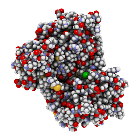 Anaplastic lymphoma kinase (ALK, tyrosine kinase domain) protein. Shown in complex with the inhibitor crizotinib. 3D rendering based on protein data bank entry 2xp2. Atoms are represented as spheres with conventional color coding. Stock Photo