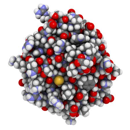 線維芽細胞成長因子 1 (FGF1、ヘパリン結合性成長因子 1) 蛋白質。FGF1 は、糖尿病の治療のため調査中です。蛋白質のデータ ・ バンクのエントリ 3ud7