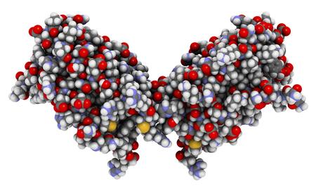 Interleukine 10 (IL-10) cytokine-eiwit. Onderzoek gedaan naar de behandeling van kanker. 3D-weergave op basis van proteïne-gegevensbank ingang 2h24. Atomen worden weergegeven als bollen met conventionele kleurcodering. Stockfoto