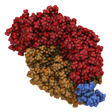 leukemia: B-lymphocyte antigen CD20 epitope peptide fragment, bound to rituximab (Fab fragment). Indications for rituximab include leukemia, lymphoma and rheumatoid arthritis. 3D rendering based on protein data bank entry 2osl. Atoms shown as color-coded spheres. P