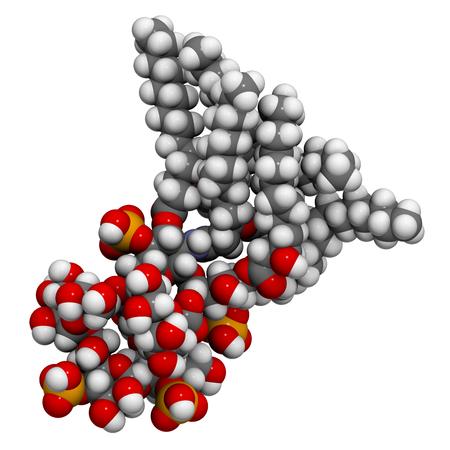 E. coli의 Lipopolysaccharide (LPS, lipid A 및 inner core fragment) 내 독소 분자. 단백질 데이터 뱅크 항목 3fxi를 기반으로하는 3D 렌더링. 원자는 일반적인 색