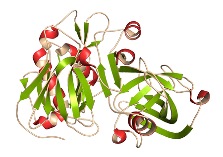 secondary: Beta-secretase 1 (BACE1, aspartyl protease domain). BACE inhibitors are investigated as a therapy for Alzheimers disease. 3D rendering based on protein data bank entry 3r2f. Cartoon representation with secondary structure coloring (green sheets, red heli Stock Photo