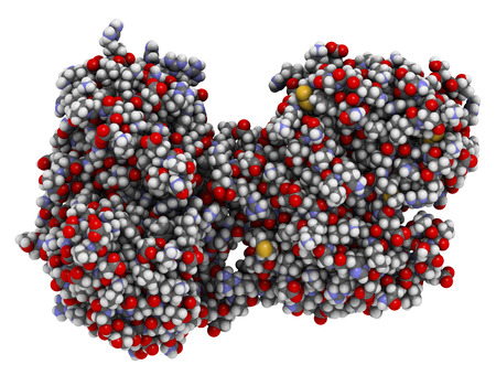 Lactoferrin eiwit. Lactoferrine is een ijzerbindend eiwit dat deel uitmaakt van het aangeboren immuunsysteem. Het is betrokken bij het binden en transporteren van ijzerionen, maar heeft ook antimicrobiële eigenschappen. 3D-weergave op basis van proteïne-gegevensbankinvoer 1b0l. atomen