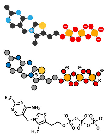 Thiamine triphosphate molecule. Conventional skeletal formula and stylized representations.