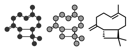 Caryophyllene molecule. Constituent of multiple herbal essential oils, including clove oil. Conventional skeletal formula and stylized representations.