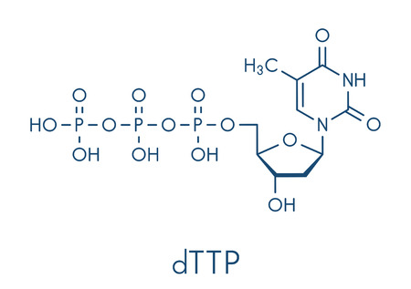 Thymidine triphosphate ucleotide molecule.