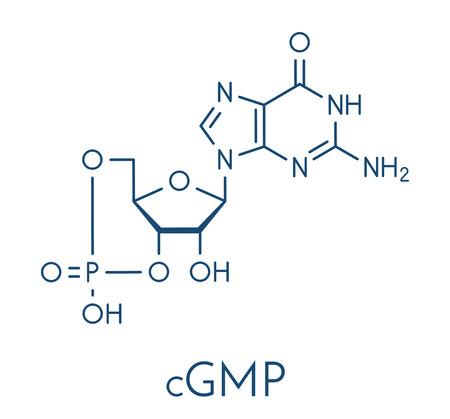 Cyclic guanosine monophosphate (cGMP) molecule. Important second messenger.