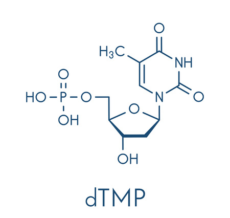 Thymidine monophosphate (TMP, thymidylate) nucleotide molecule. DNA building block. Skeletal formula.