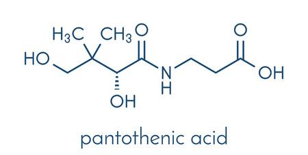 비타민 B5 (판토텐산, 판토텐산) 분자. 골격 공식. 일러스트