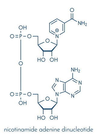 Nicotinamide adenine dinucleotide (NAD+) coenzyme molecule. Important coenzyme in many redox reactions. Skeletal formula.