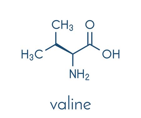 Valine (l-valine, Val, V) amino acid molecule. Skeletal formula. Illustration