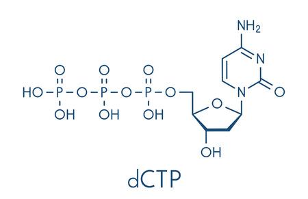 Deoxycytidine triphosphate (dCTP) nucleotide molecola. Blocco di costruzione del DNA. Formula scheletrica. Archivio Fotografico - 85870758