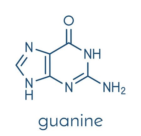 구아닌 (G) 퓨린 핵 염기 분자. DNA와 RNA에 존재하는 염기. 골격 공식. 일러스트