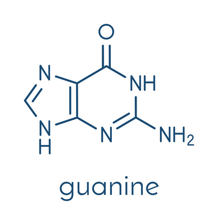 Guanine (G) purine nucleobase molecule. Base present in DNA and RNA. Skeletal formula. Stock Vector - 85870779