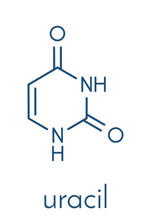 Uracil (U) nucleobase molecule. Present in ribonucleic acid (RNA). Skeletal formula.